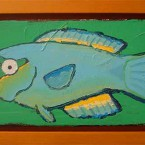Queen Parrotfish (male)