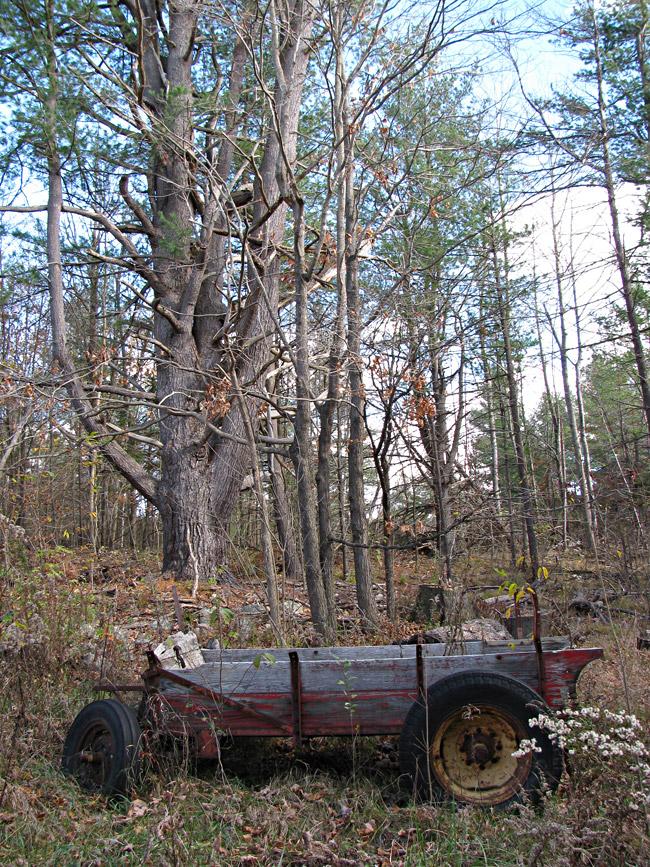 wagon-IMG_7908