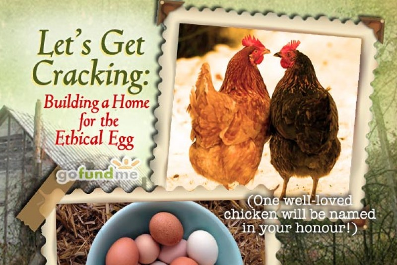 Ethical Egg campaign