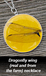 Dragonfly wing necklace fundraiser