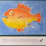 Close-up #2 of Pin Cushion Fish